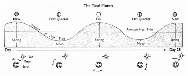 Spring Tide Diagram Full Wire Data Schema